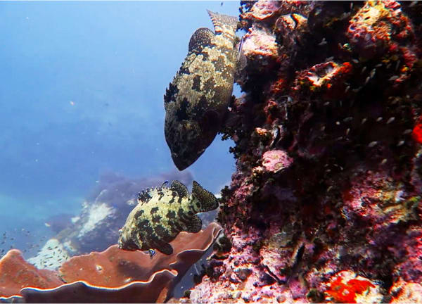 Inmersión Sail Rock ES 2