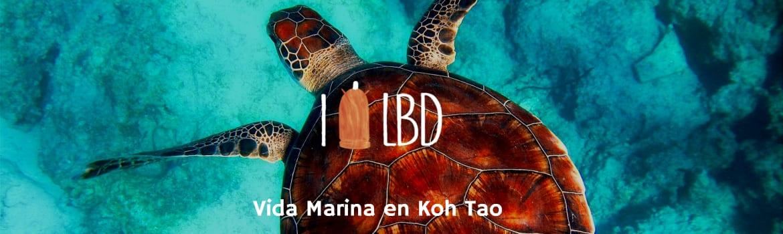 Vida marina buceando en Koh Tao